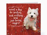 Doggie Birthday Cards Smiling Happy Dog Birthday Cards Hallmark Card Pictures