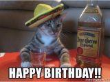 Drunk Girl Birthday Meme Happy Birthday Drunk Cat Meme Generator