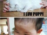 Fat Chick Birthday Meme Cute Animals with Captions Barnorama
