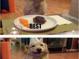 Funniest Birthday Memes Ever 17 Best Images About Cute and Funny Dogs On Pinterest