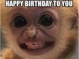 Funniest Birthday Memes Ever top 30 Funny Birthday Quotes Quotes Humor