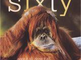 Funny 60th Birthday Memes Age 60 Funny Birthday Card orangutan Framed Cardspark