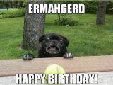 Funny Animal Birthday Memes Funny Animal Birthday Memes Animal Happy Birthday Memes