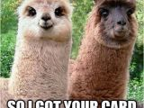 Funny Animal Birthday Memes Funny Llama Pictures