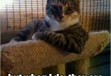 Funny Belated Birthday Meme 20 Best Happy Belated Birthday Memes Sayingimages Com