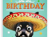 Funny Birthday Cards for Nephew Nephew Birthday Card Funny Humour Animal Dog Greetings