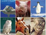 Funny Birthday Cards with Animals Animal Birthday Cards Cheque24