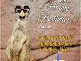 Funny Birthday Cards with Animals Cute Animals and Funny Happy Birthday Wishes