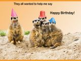 Funny Birthday Cards with Animals Happy Birthday Cards with Animals Birthday Party Ideas