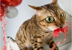 Funny Birthday Cards With Cats 41 Best Funny Birthday Wishes For