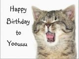 Funny Birthday Cards with Cats 41 Best Funny Birthday Wishes for Birthday Boy Girl Aunt