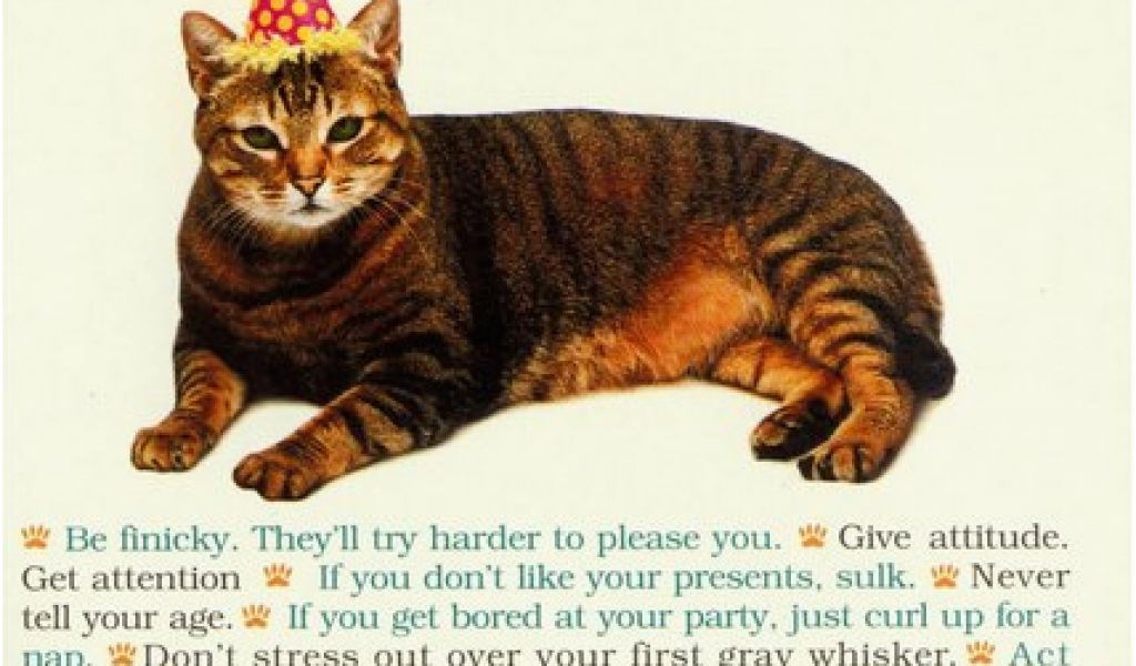 Download By SizeHandphone Tablet Desktop Original Size Back To Funny Birthday Cards With Cats