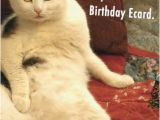 Funny Birthday Cards with Cats Birthday Ecards Cats Funny Ecards Free Printout Included