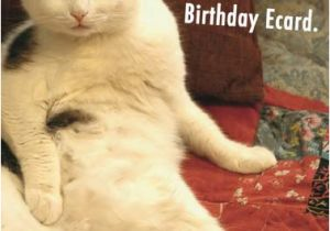 Funny Birthday Cards With Cats Ecards Free Printout Included