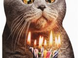 Funny Birthday Cards with Cats Cat Flaming Shot Oversized Funny Birthday Card