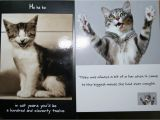 Funny Birthday Cards with Cats Cute Cat Birthday Quotes Quotesgram