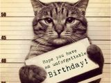 Funny Birthday Cards with Cats Funny Birthday Meme