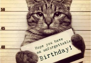 Funny Birthday Cards With Cats 41 Best Wishes For