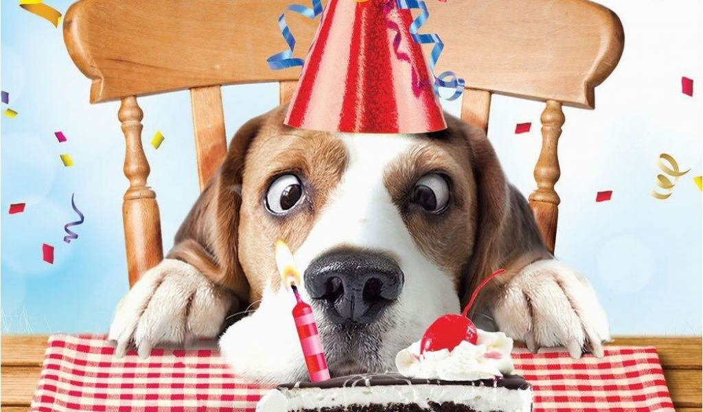 Download By SizeHandphone Tablet Desktop Original Size Back To Funny Birthday Cards With Dogs