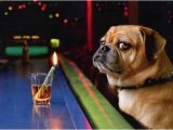 Funny Birthday Cards with Dogs Dog at Bar with Shot Glass Funny Birthday Card Greeting