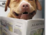 Funny Birthday Cards with Dogs Dog Reading Funnies Funny Birthday Card Greeting Card by