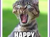 Funny Birthday Meme for Kids Happy Birthday Memes with Funny Cats Dogs and Cute