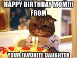 Funny Birthday Memes for Mom Happy Birthday Mom Memes Wishesgreeting