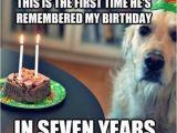 Funny Clean Birthday Memes Birthday Fun Dog Quotes Quotesgram