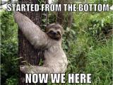 Funny Clean Birthday Memes Sloth Slothmeme Sloth Memes Sloth Cute Sloth Sloth