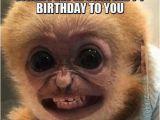 Funny Clean Birthday Memes You Look Like A Monkey Birthday Humor Humor Jokes