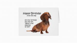 Funny Dachshund Birthday Cards Funny Dachshund Birthday Card Zazzle Ca