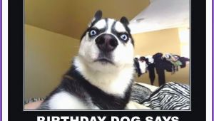 Funny Dog Birthday Memes Happy Birthday Memes with Funny Cats Dogs and Cute