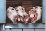 Funny Donkey Birthday Cards 3 Donkeys Laughing Funny Birthday Card Greeting Card by