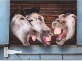 Funny Donkey Birthday Cards 3 Donkeys Laughing Funny Birthday Card Greeting Card by
