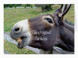 Funny Donkey Birthday Cards Mules and Donkeys Hot Girls Wallpaper