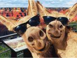 Funny Donkey Birthday Cards Two Donkeys Funny Birthday Card Greeting Card by Avanti