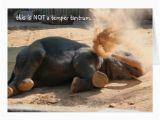 Funny Elephant Birthday Card Funny Elephant Belated Birthday Card Zazzle