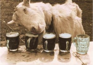 Funny Goat Birthday Cards Funny 21st Birthday Greeting Card Goat too Many Trips to