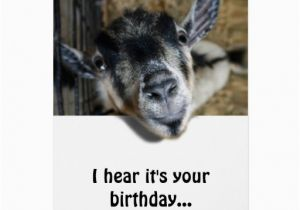 Funny Goat Birthday Cards Nosy Goat Looking Up Birthday Greeting Card Zazzle