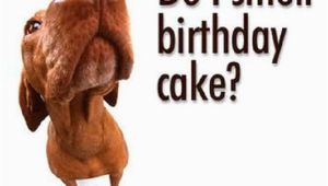 Funny Happy Birthday Pic Quotes Funny Birthday Sayings