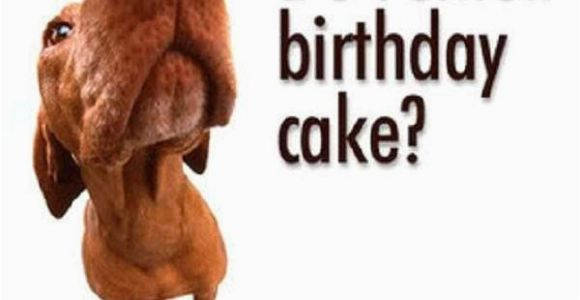 Funny Happy Birthday Picture Quotes Funny Birthday Sayings