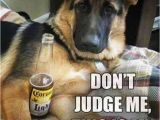 German Shepherd Birthday Meme 24 Funny Animal Pictures Of the Day Funny Animals
