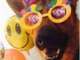 German Shepherd Birthday Meme Happy Birthday Card German Shepherd Fb Special