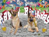 German Shepherd Birthday Meme Happy Birthday German Shepherd Youtube