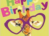 Giraffe Birthday Card Sayings Cute Happy Birthday Giraffe with Quote Pictures Photos