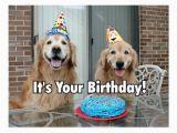 Golden Retriever Birthday Meme Golden Retriever Happy Birthday Cake Postcard Zazzle