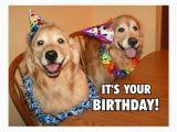 Golden Retriever Birthday Meme Golden Retriever Let 39 S Party Birthday Postcard Zazzle Com
