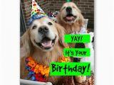 Golden Retriever Birthday Meme Golden Retriever Yay It 39 S Your Birthday Card Zazzle Com
