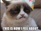 Grumpy Cat Birthday Meme Generator 17 Best Images About I Love You Grumpy Cat On Pinterest