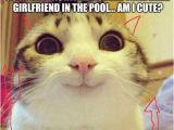 Grumpy Cat Birthday Meme Generator 25 Best Ideas About Cat Meme Generator On Pinterest